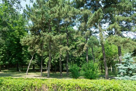 Beautiful green trees in a city park in summer sunny day Stock Photo