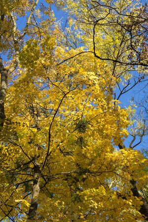 Autumn landscape. Trees with yellow, orange and red leaves. Golden autumn Stock fotó