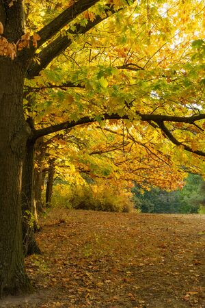 Autumn landscape. Trees with yellow, orange and red leaves. Golden autumn 写真素材