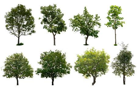 isolated tree set a white background. Stock Photo