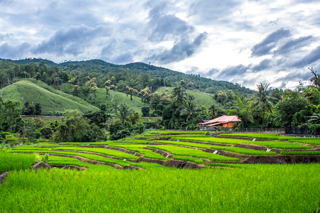 terraced field: Terraced Rice Field in Maejam, Chiangmai, Thailand Stock Photo