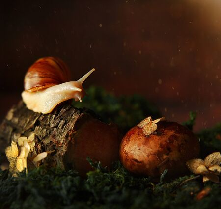 Snail in the forest on a tree, fantastic photo, on the background of moss, dark background, sparkles Stock Photo