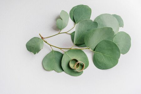 Wedding gold rings lie on leaves of light green eucalyptus trees on a faded light background.