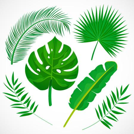 Ensemble de feuilles de palmier plat. Collection d'icônes de plantes tropicales. Banane, monstera, palmetto, feuille de coco isolé sur fond blanc. Illustration vectorielle botanique
