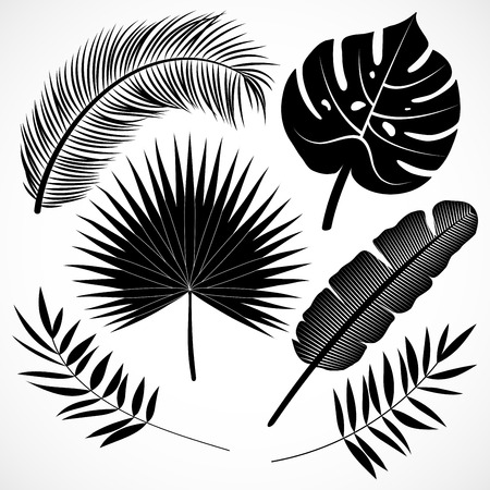 Palm leaves silhouette set. Black tropical plants icons collection isolated on white background. Vector illustration Banque d'images - 121428408