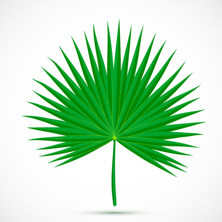 Palmetto leaf. Tropical plant isolated on white background. Flat style botanical vector illustration