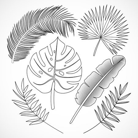 Hand drawn palm leaves silhouette set. Black tropical plants outline icons collection isolated on white background. Vector illustration Banque d'images - 121428410