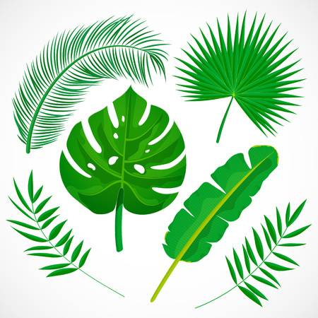 Flat palm leaves set. Tropical plants icons collection. Banana, monstera, palmetto, coconut leaf isolated on white background. Botanical vector illustration