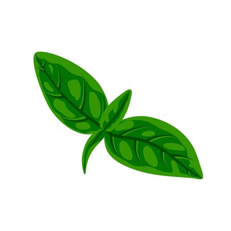 Fresh green basil leaves isolated on white. Flat natural fresh food herb leaf, cooking ingredient for pizza, pasta, pesto sauce. Vector illustration for web, menu, design, app, print