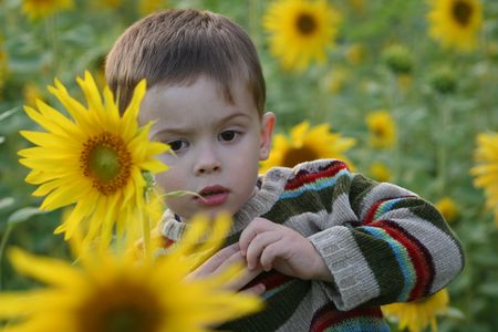 The child in sunflowers photo