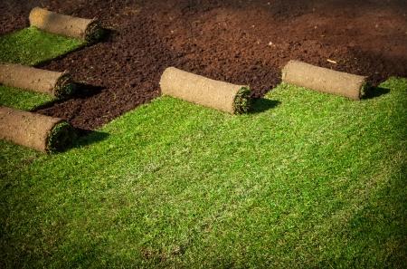 grassy plot: grass carpet