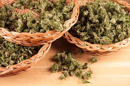 big canabis marijuana plant detail on wood table photo