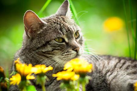 국내의: 국내 고양이