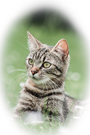 domestic: domestic cat Stock Photo