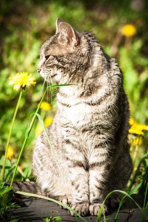 kitty cat: domestic cat Stock Photo