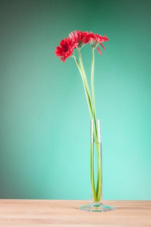 glass vase: Gerbera in a glass vase Stock Photo
