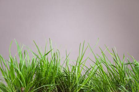 grassy plot: leaf grass on a gray background