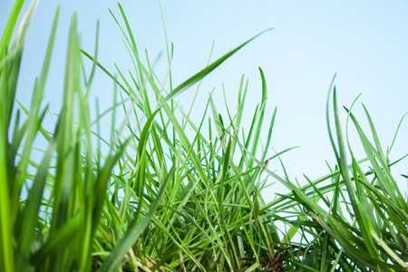 grassy plot: leaf grass on a blue background Stock Photo