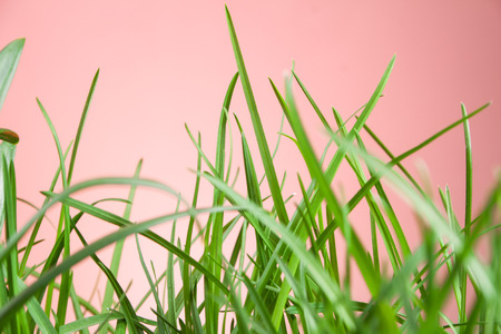 grassy plot: great detail leaf grass on natural background Stock Photo