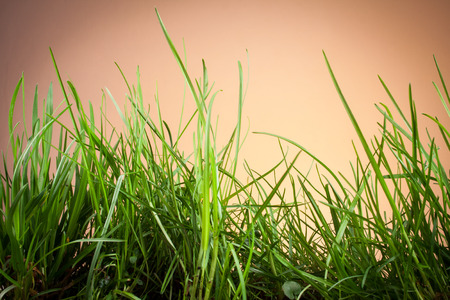 grassy plot: Leaves of grass on an orange background