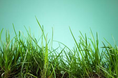 grassy plot: leaf grass on a green background