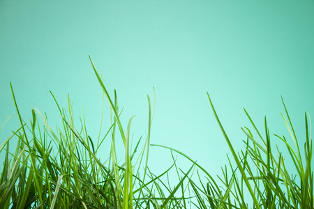 grassy plot: leaf grass on a green background