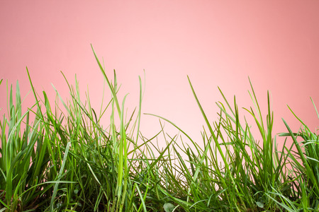 grassy plot: leaf grass on a pink background Stock Photo