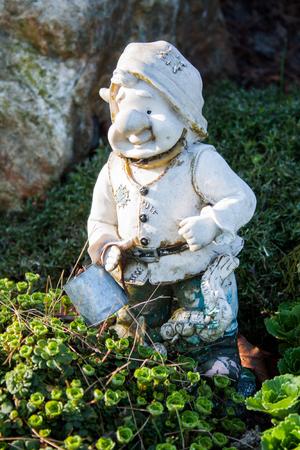 dwarf: Dwarf in the garden