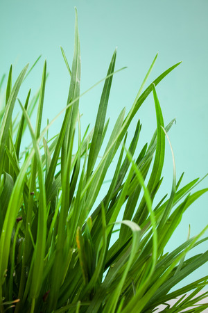 sunligh: great detail leaf grass on a green background