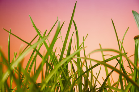 sunligh: great detail leaf grass on natural background Stock Photo