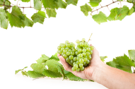 winemaker: grapes, white wine in the hands of the winemaker Stock Photo