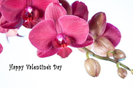 St.Valentines postcard with purple orchid