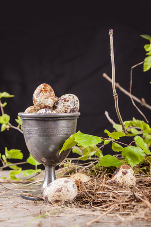 quail eggs on a black background and branches in the background
