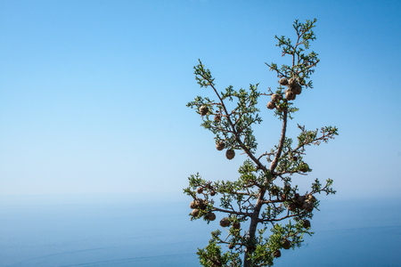 cypress on the Mediterranean Sea