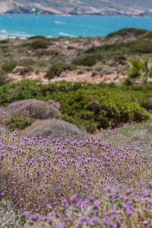 Mediterranean mackie flora on the hillside