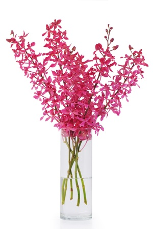 red orchid in vase on white Stock Photo - 13836287