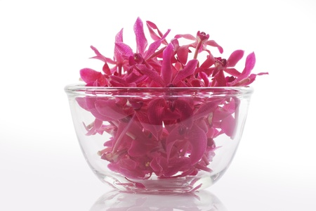 sepals: red orchid in glass bowl isolated white