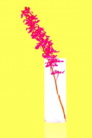 purple orchid bunch in vase on yellow background photo