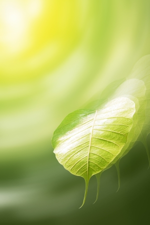 pho or bodhi leaf be blown away in the sky  Stock Photo