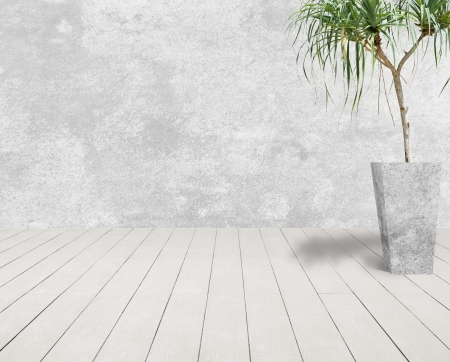 white grunge cement wall and white wood floor with tree in cement pot.