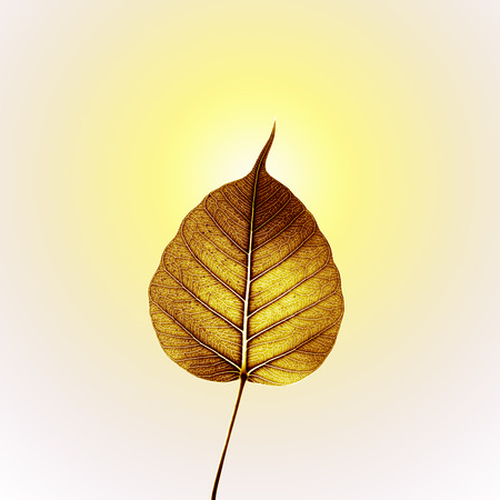gold pho or bodhi leaf with yellow halo  photo