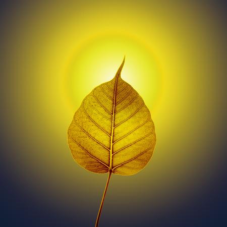 gaya: gold pho or bodhi leaf with halo background  Stock Photo