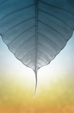 spiritual energy: art of pho or bodhi leaf