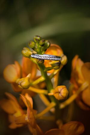 The diamond engagement ring and the background of the nature. the ring on the asia orchid head.