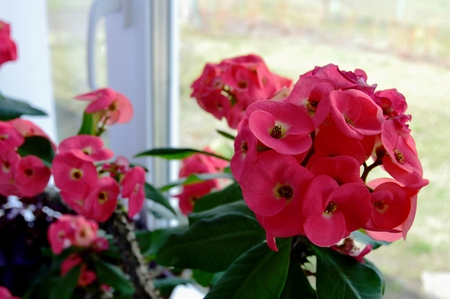 houseplant 写真素材