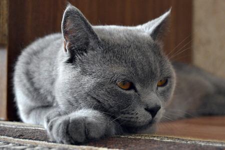 猫 写真素材 - 85258405