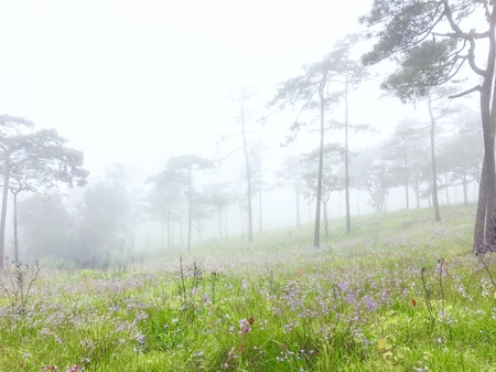 Purple Naga crest lea and Foggy at National park Poosoidao. Its good view lea purple full place.