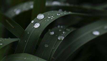 transparent water drops on dark green grass photographed close up Imagens