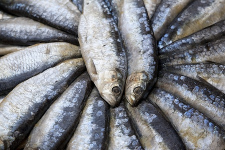 Sardines for sale on Market Stall in Mallorca, Spain photo