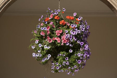 Hanging Basket of Pansy - Violet Flowers photo